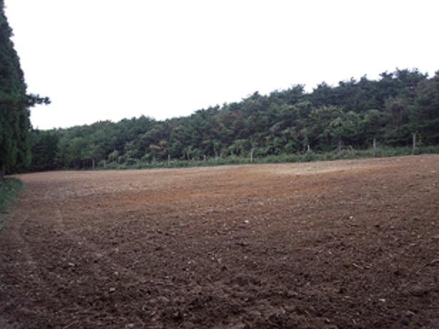 耕作放棄地再生2.jpg