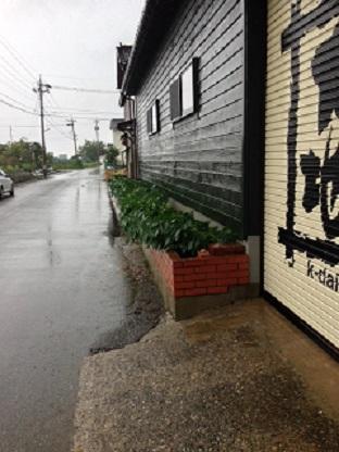 台風、幸運の大豆.JPG
