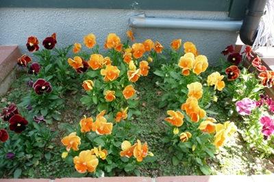 6月の金沢大地の花壇2
