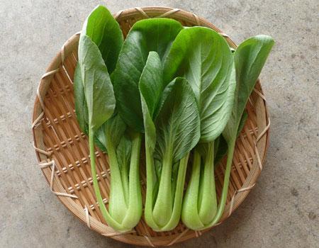 オーガニックチンゲン菜