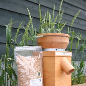 金沢大地の花壇の小麦とミル&玄麦