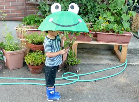 梅雨のカエル